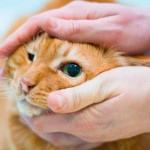 Помощь коту при слезотечении