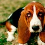 Воспаление поджелудочной железы у собаки