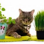 Причины рвоты у кошек
