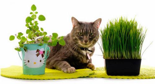 профилактика рвоты у кошек