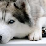 Причины и помощь собаке при судорожном припадке