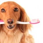 Чистка зубов и удаление зубного камня у собаки