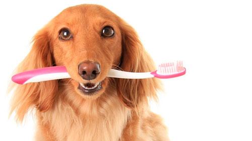 собака чистит зубы