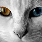 Различные виды заболеваний глаз у кошек