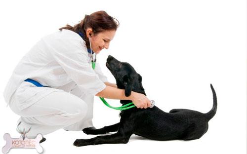 выявление простатита у собаки