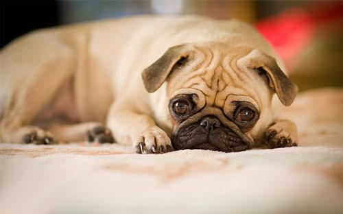 гастроэнтерит у собаки