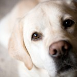 Инсульт или кровоизлияние в мозг у собаки