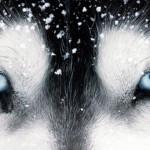 Причины и лечение коньюктивита у собаки