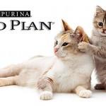 Сухой корм Проплан: польза для кошки и ее хозяина
