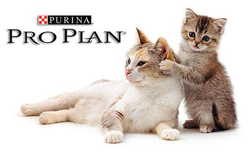корм Проплан для кошек