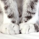 Зачем кошка топчет вас лапками?