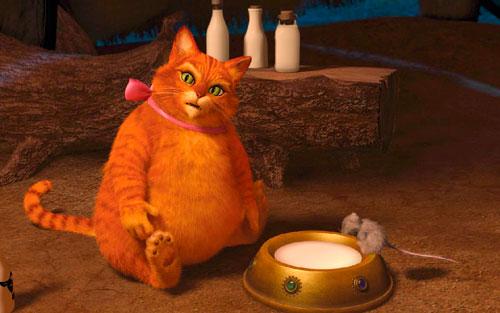 кот объелся молока