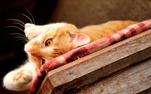 котик удобно устроился
