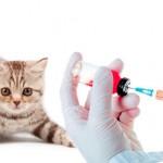 Почему кошкам нужно делать прививки?