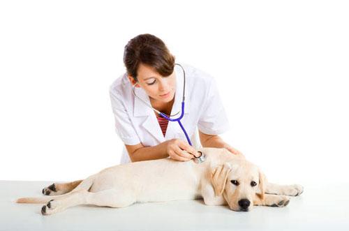 лечение сердечной недостаточности у собак