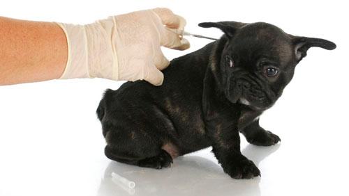 лечение собаки инсулином