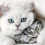 Кошка рожает: только спокойствие