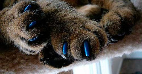 острые когти у кошки