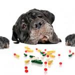 Симптомы и первая помощь собаке при отравлении