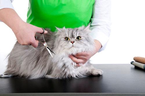 подготовка кота к стрижке