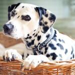 Как помочь собаке во время родов и после них?