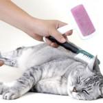 Стрижка: дань моде или забота о здоровье кошки?