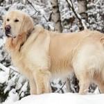 Причины линьки и уход за шерстью собаки