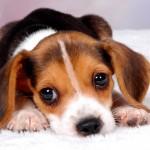 Обнаружение и профилактика рахита у собаки