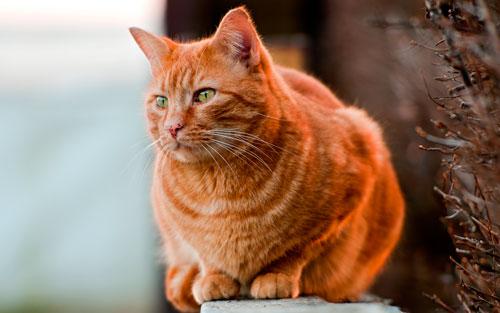 уличный кот на заборе