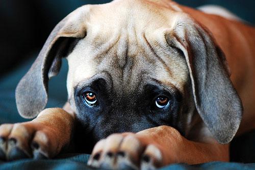 зудневая болезнь у собаки