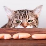 Питание кошки: как найти идеальный баланс?