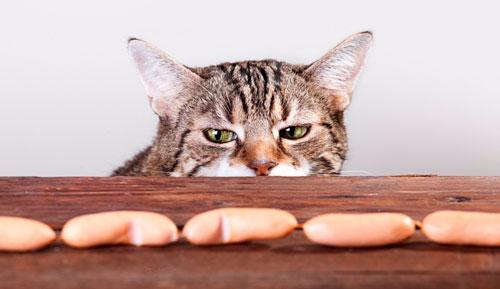 что нельзя давать кошке
