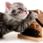 Делаем уютный кошачий домик