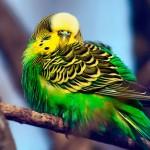 Как сделать из попугая собеседника?