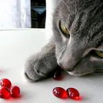 Какие витамины необходимы для кошек?