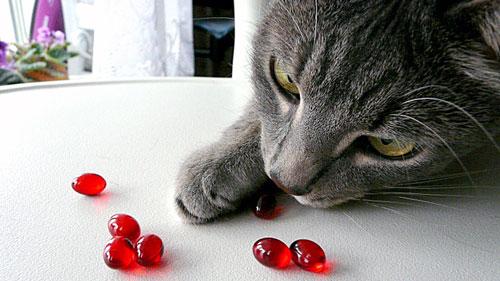 кошка ест витамины