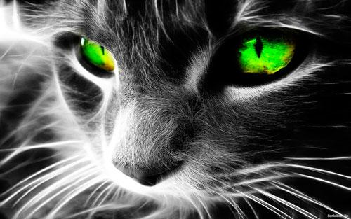 кошка видит разные цвета