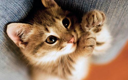 мурлыкающий котенок