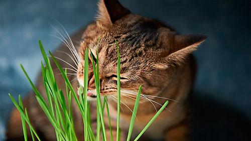 нехватка витаминов у кота