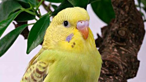 попугай на веточке