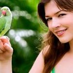 Ручной попугайчик: как этого добиться?