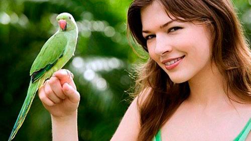 ручной попугай