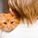 Правила ухода за кошками