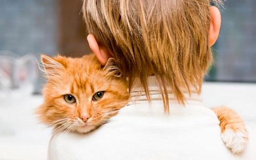 Ухаживание за котом