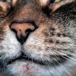 Что такое акне и как его лечить у кошек
