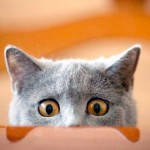 Кастрация домашнего кота: советы и рекомендации