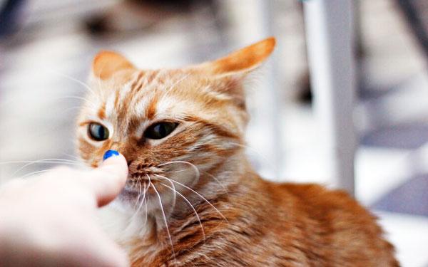 почему чихает кот