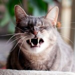 Чиханье у кошки: причины и лечение