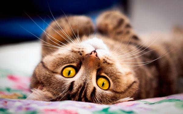 поведение кошки при течке