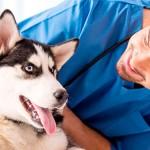 Стерилизация собаки: особенности и польза процедуры